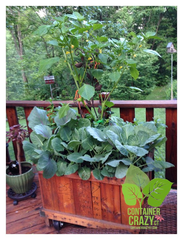 Edibles Mixed Planter with Tomatillo in Center as Thriller