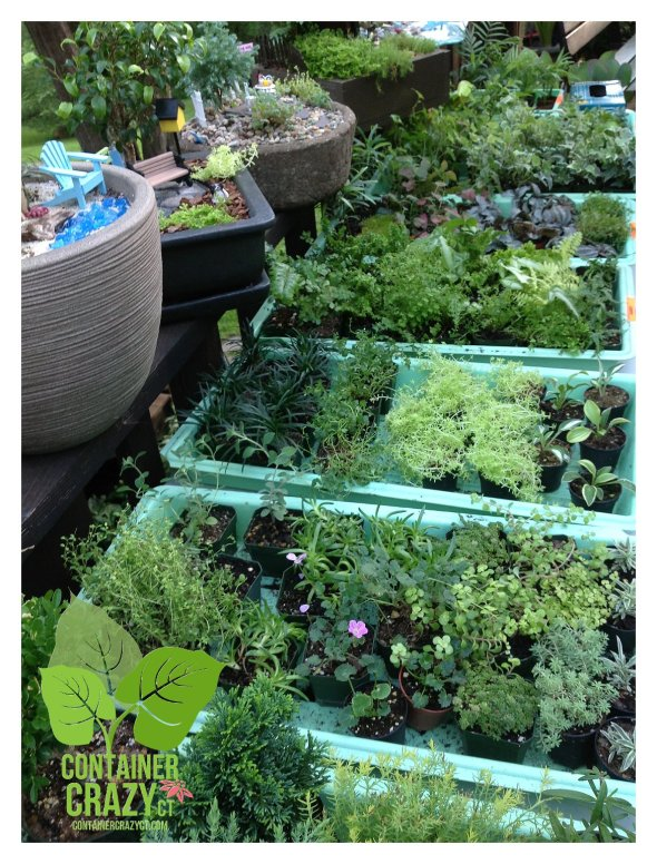 Plants by Gardening Inspirations for the Workshop