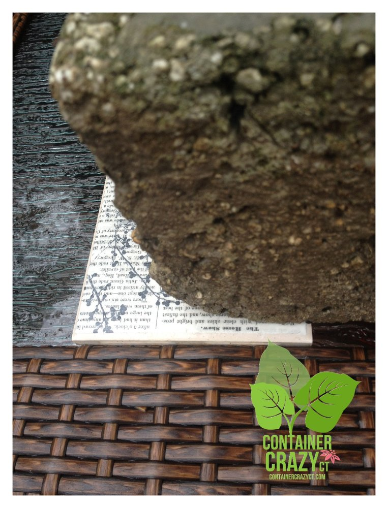 Elevate to Alleviate Potential Plant Problems in Your Patio Pots (5/6)