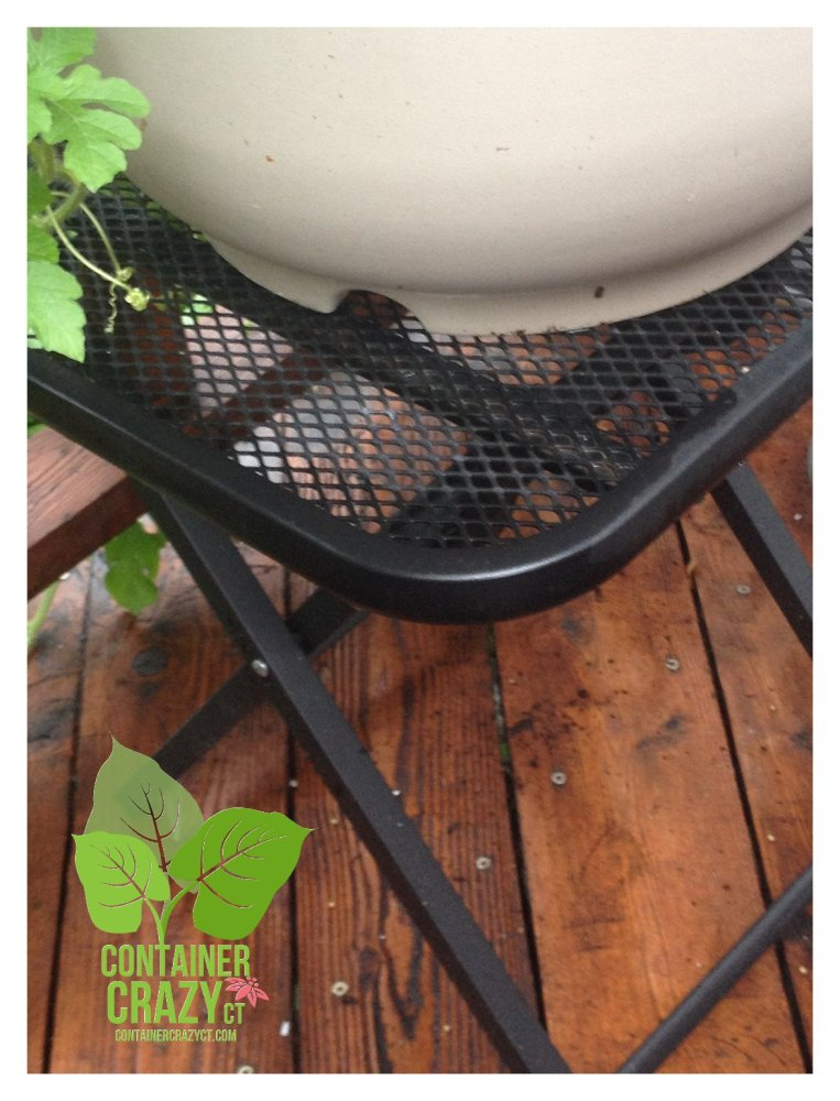 Elevate to Alleviate Potential Plant Problems in Your Patio Pots (2/6)