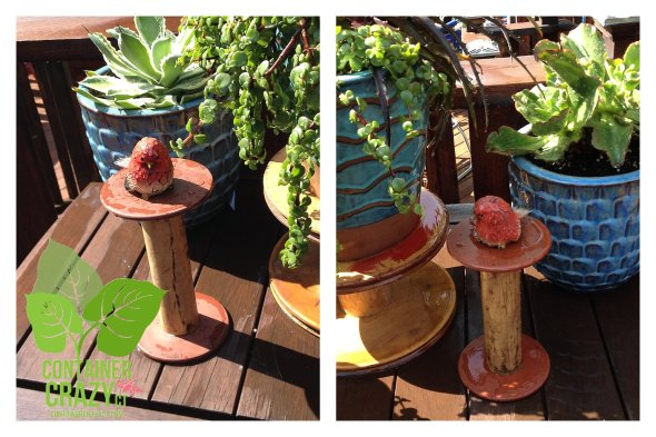 Cacti Pots Like These Will be Moved Inside Soon