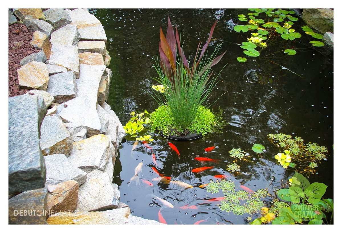 What S Wrong With My Garden Pond Water: Pondering Ponds 'Walk And Talk' Reveals Many Unexpected