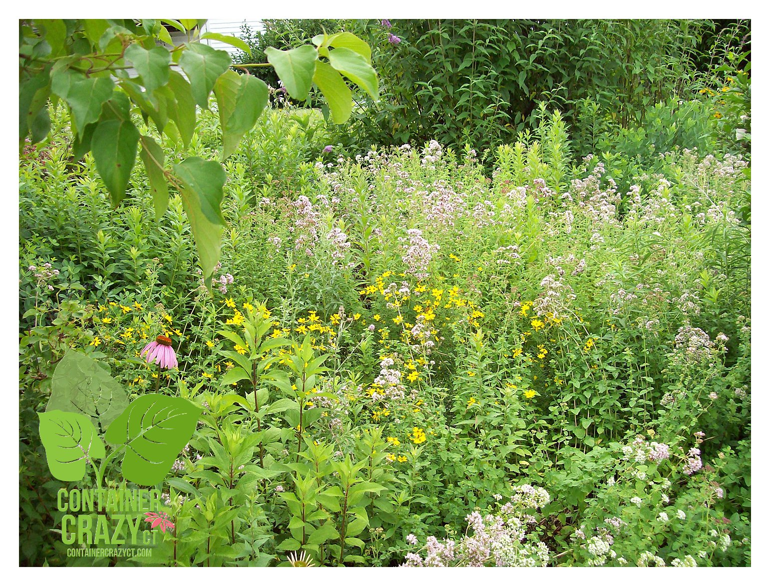 Walk In Garden Box: Our Next Walk N Talk Hour