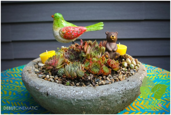A Hypertufa Round Pot with Hens and Chicks