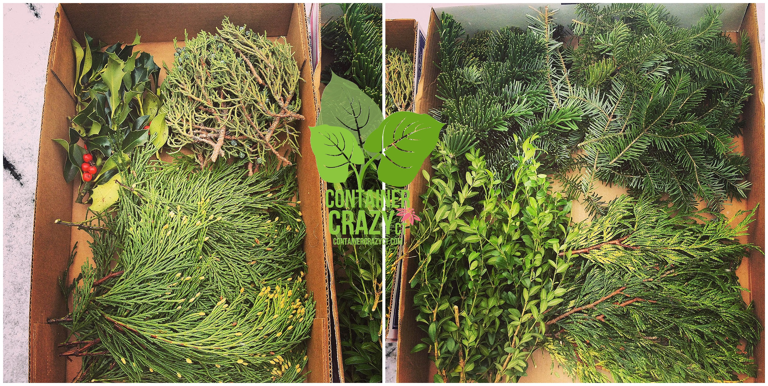 Mix of Fresh Cut Evergreens