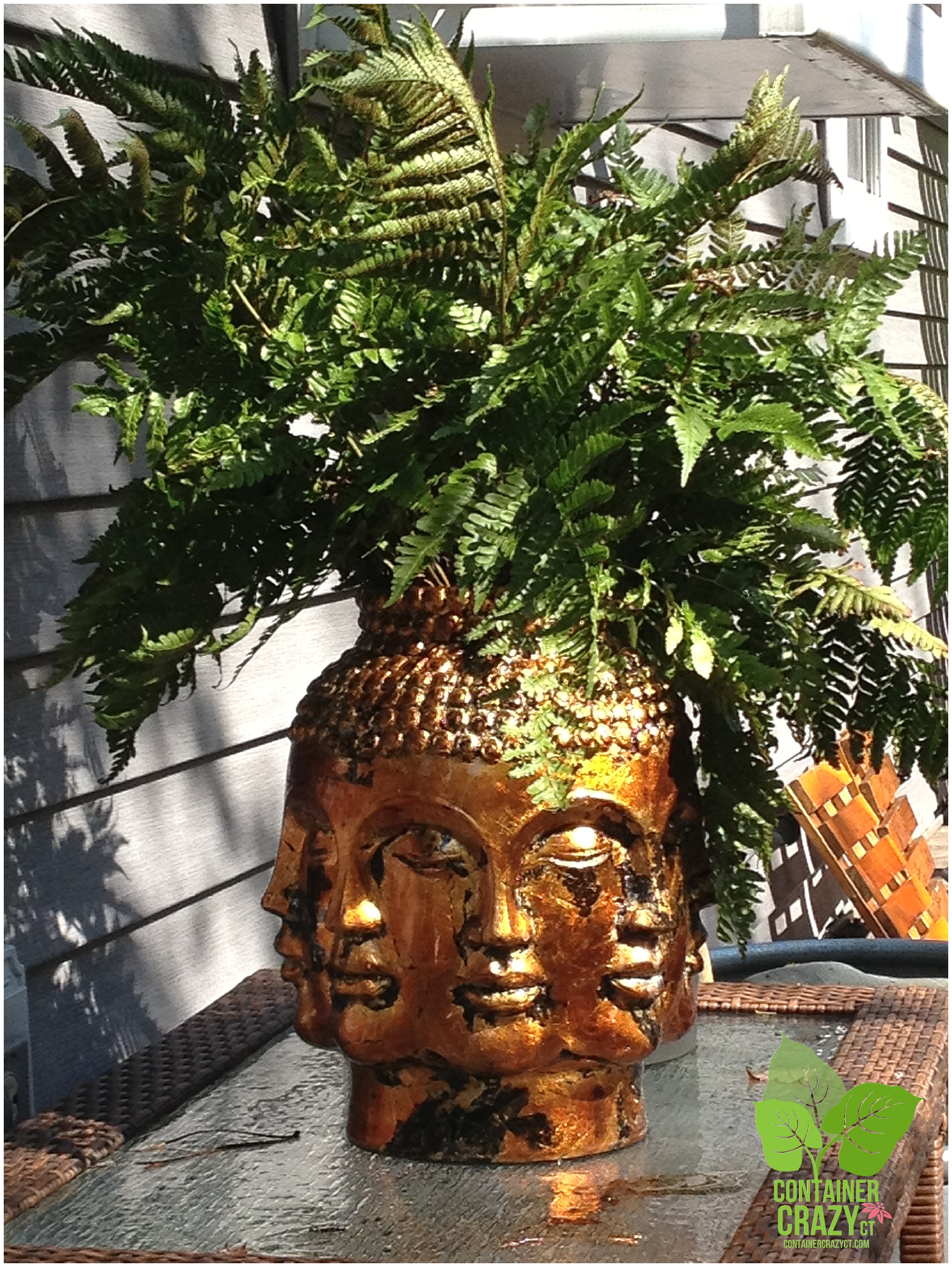 Flashback Friday Golden Head Planter With A Native