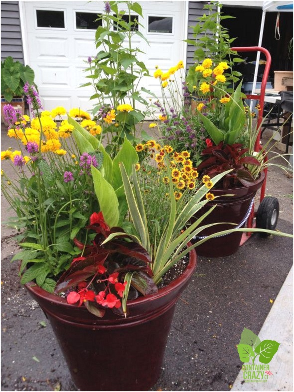 Container Garden with Mix of Perennials and Annuals
