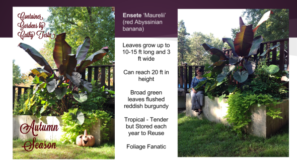 Edibles Container Gardening 2015 (1)