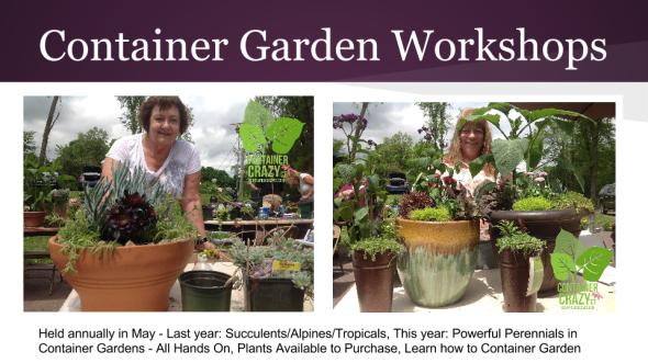 Edibles Container Gardening 2015 (5)
