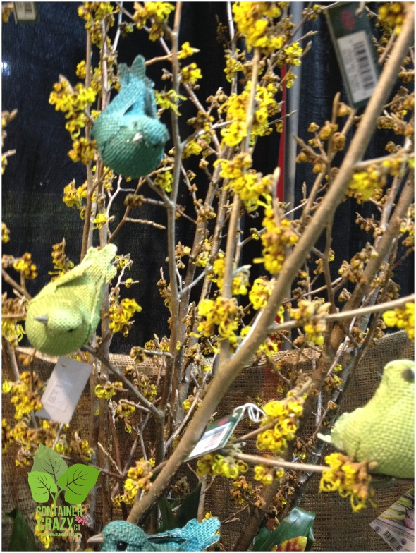 Natureworks Garden Decor on Witch Hazel branch
