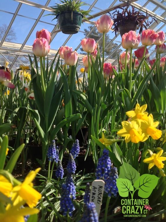 Burst of Spring Colors at Elizabeth Park in West Hartford, CT