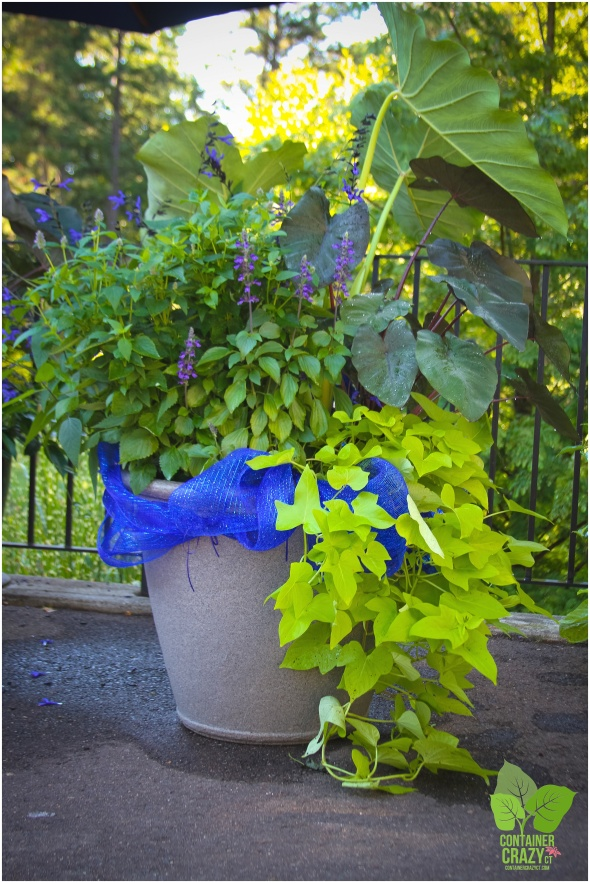 Wasabi Coleus With Vivid Lime Green Coloring Is A Top