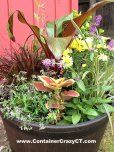 A mix of perennials and annuals with a thriller topical - Looks like a garden in a pot!