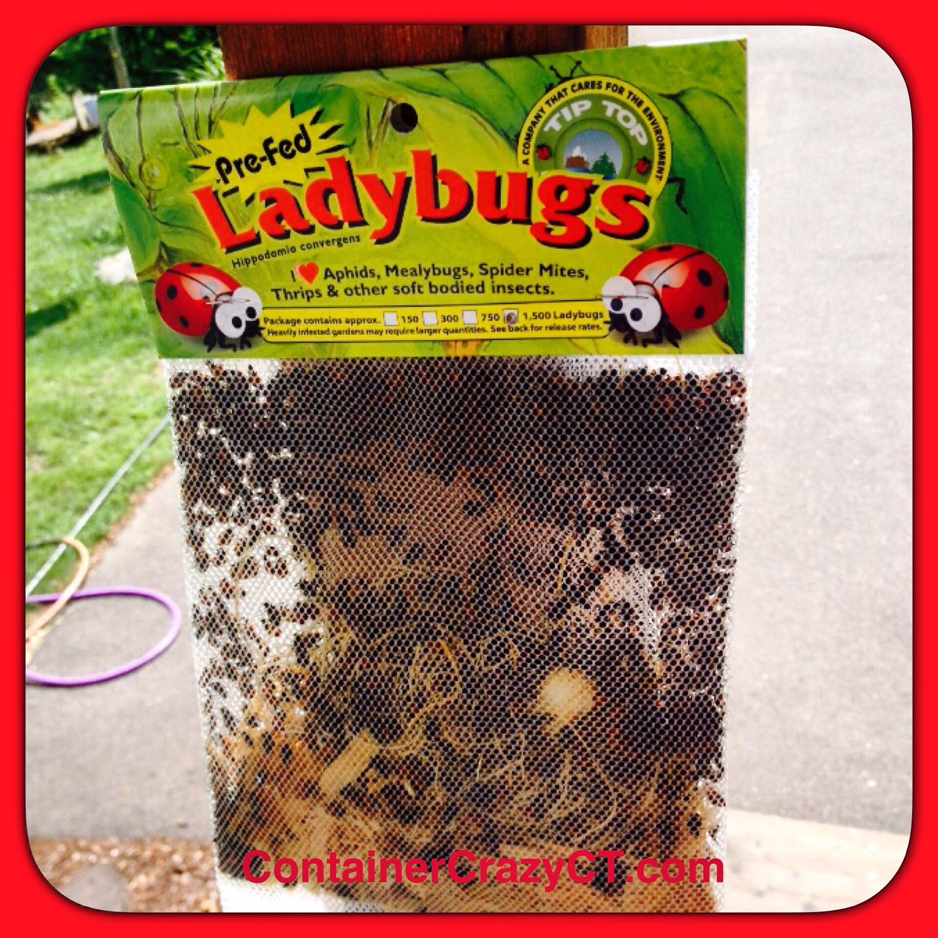 Lady Bugs are Beneficial