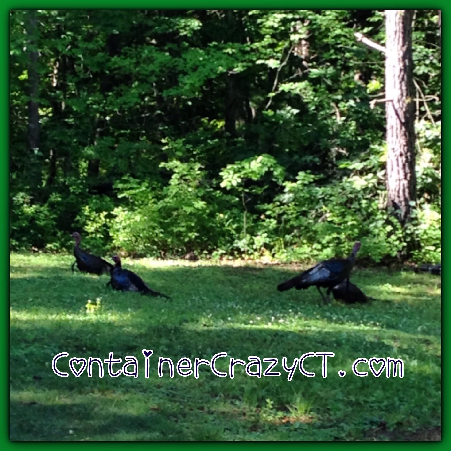 Wild Turkeys Under the Trees
