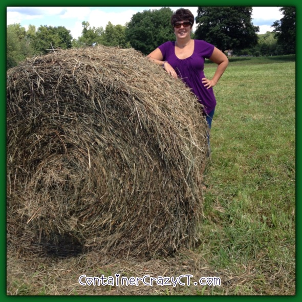 Me in Dad's hay field