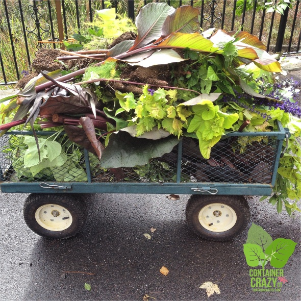 A cart filled with tops of summer plants