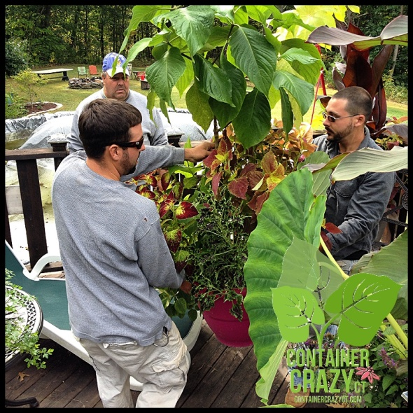 Ross and Joe with the Stemmed Plant in Center