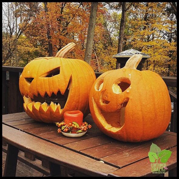 Pumpkins in Broad Brook, CT