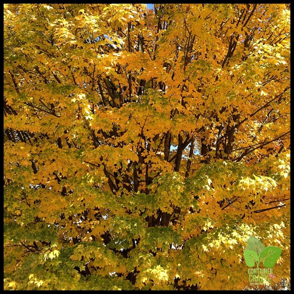 Fall Colors_0005