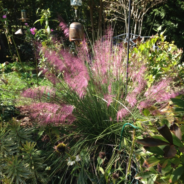 A Walk in the Garden blog shares beautiful photos of the grass growing in their gardens.
