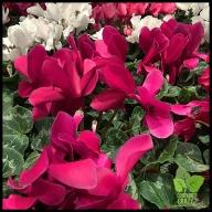 Floral Design Workshop_0038