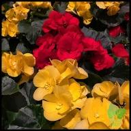 Floral Design Workshop_0039