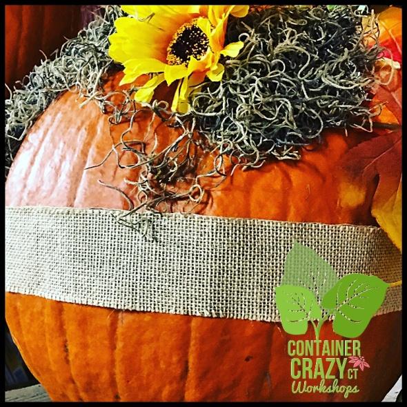 succulent-pumpkins_0008