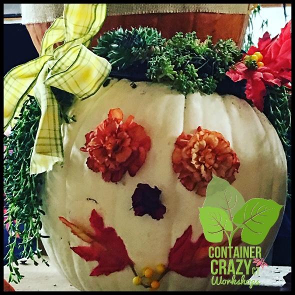 succulent-pumpkins_0009
