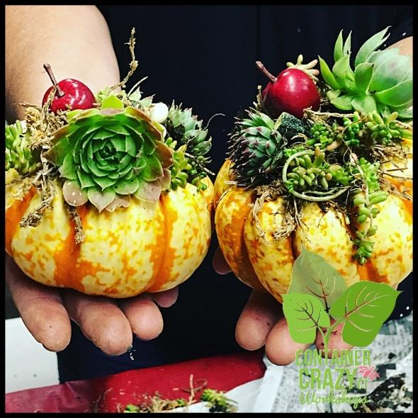 succulent-pumpkins_0011