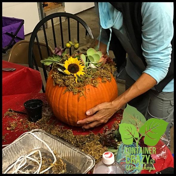 succulent-pumpkins_0013