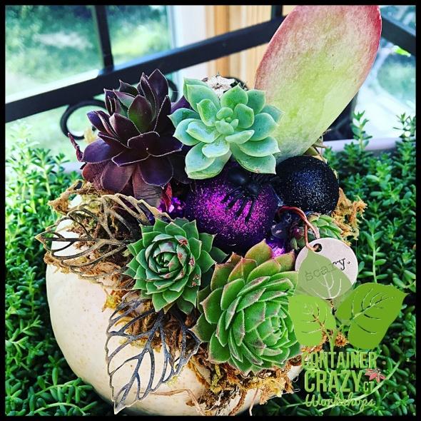 succulent-pumpkins_0025