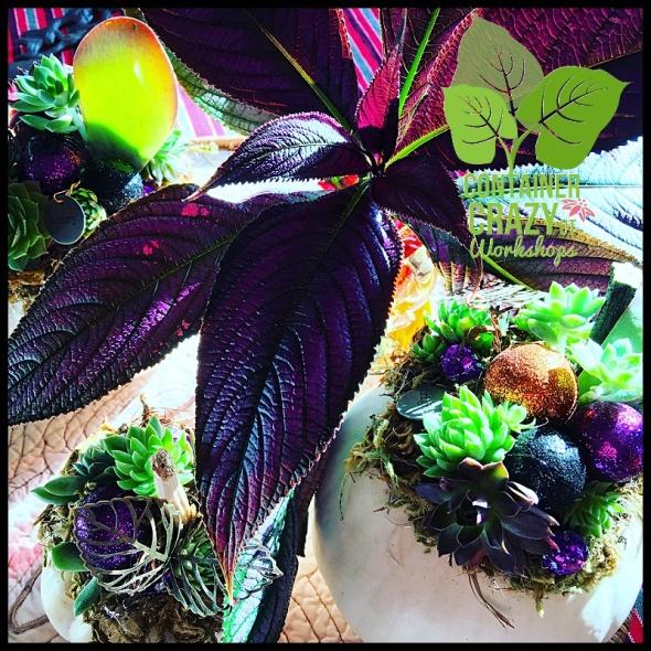 succulent-pumpkins_0027