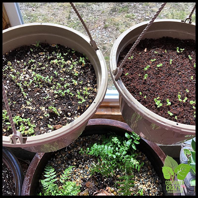 Seed Starting_0001