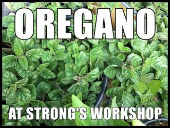 Container Garden Workshop_0011