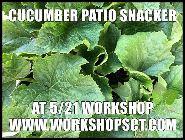 Container Garden Workshop_0013