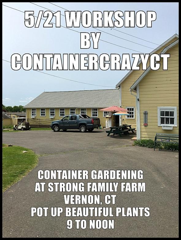 Container Garden Workshop_0014