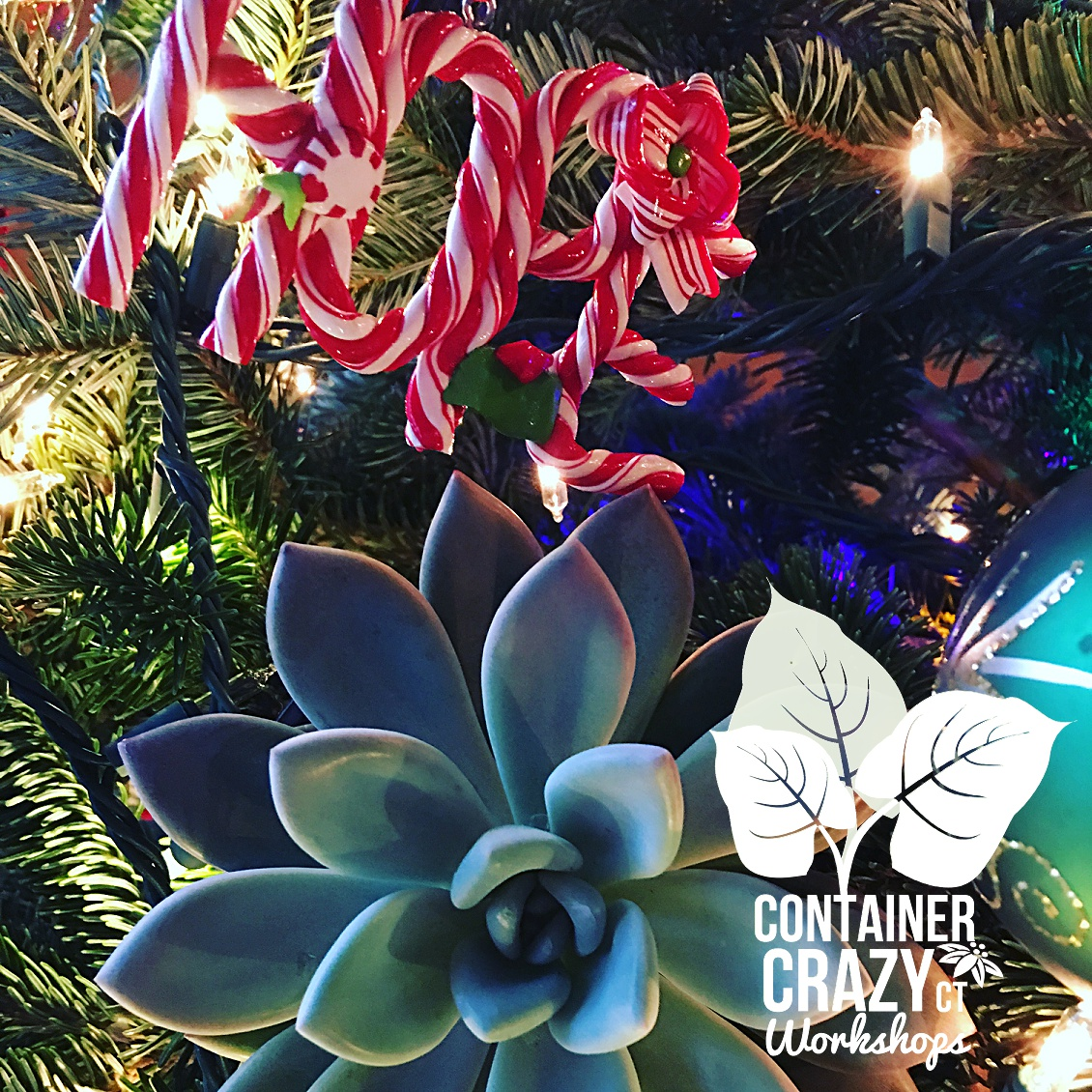 wreaths-by-cathy-testa-of-container-crazy-ct_0013