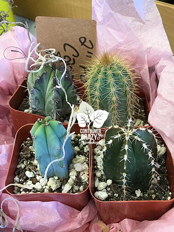 Terrarium Plants Copywrite CCC_0001