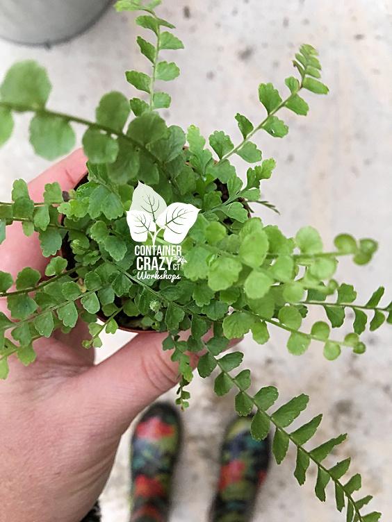Terrarium Plants Copywrite CCC_0002