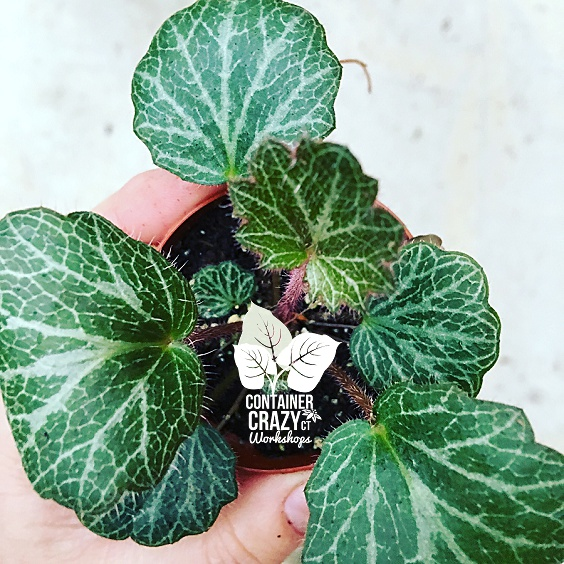 Terrarium Plants Copywrite CCC_0005
