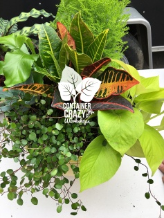 Houseplants Copywrite CCC_0001
