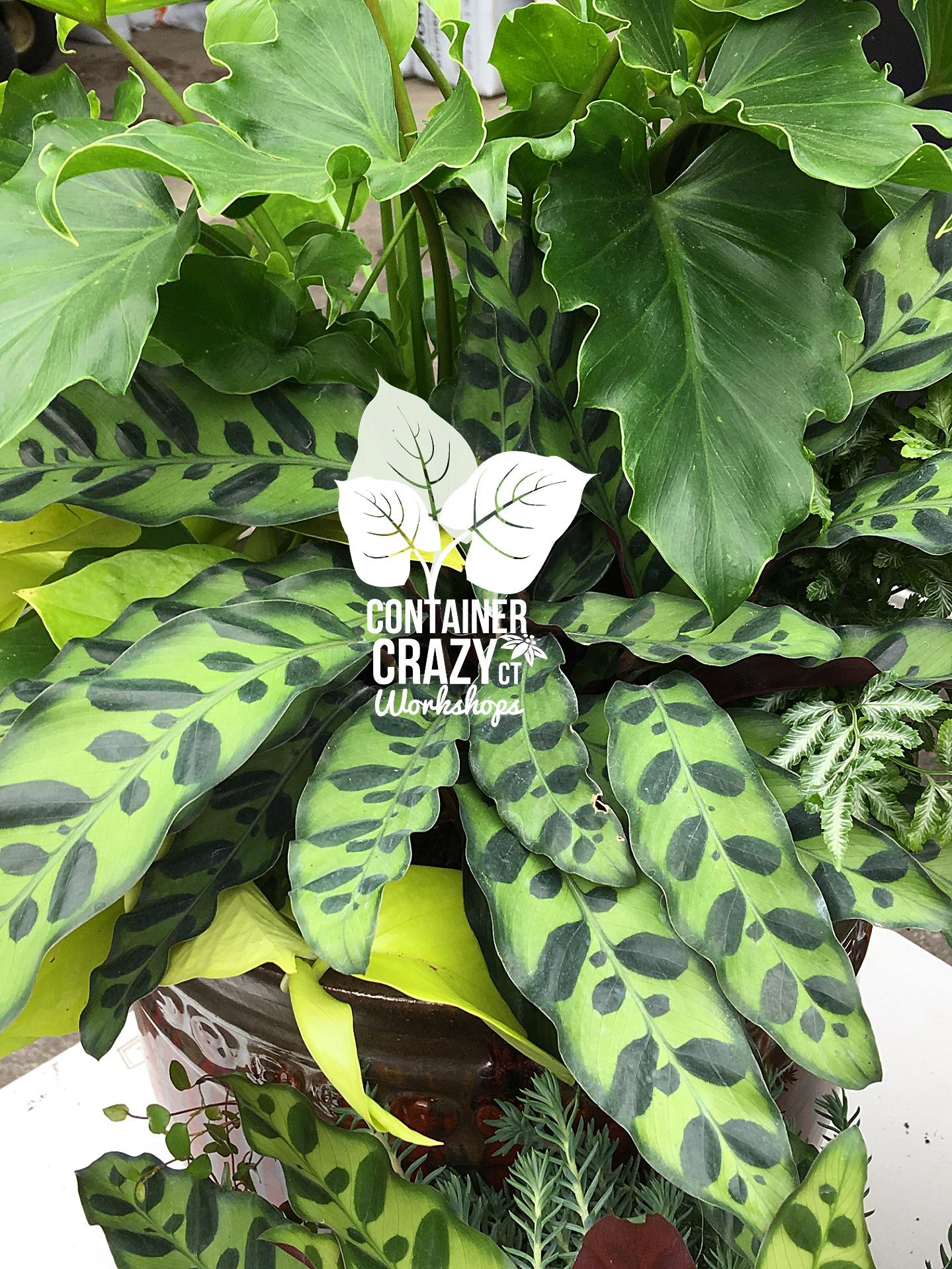 Houseplants Copywrite CCC_0002