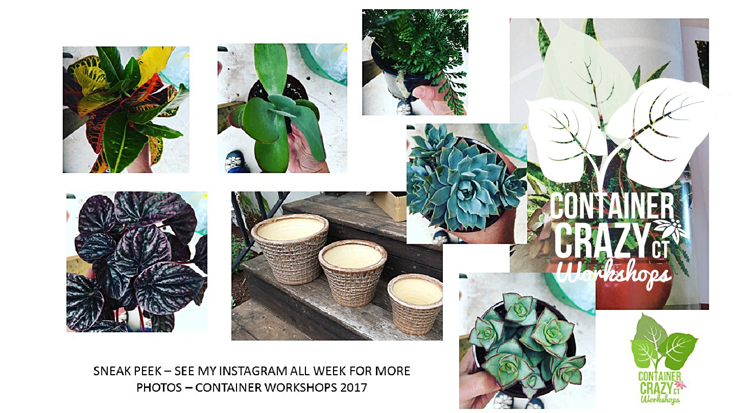 Houseplants Copywrite CCC_0003
