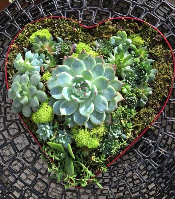 a heart iiiii