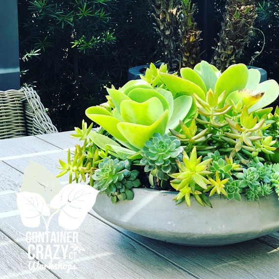 Thrillers And Spillers Are Needed In Succulent Dish Gardens Too