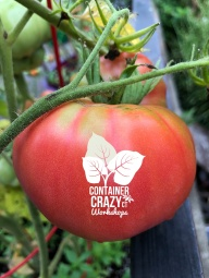 tomatoe 2018_0002