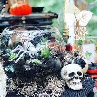 spooky terrarium copywrite photo C Testa_0001