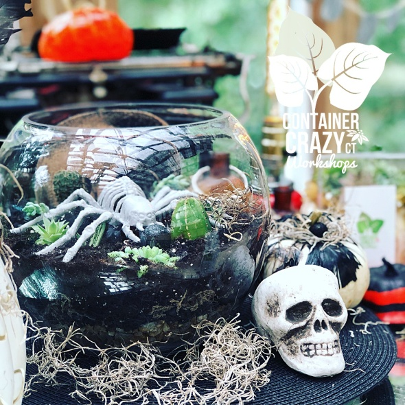 spooky terrarium copywrite photo C Testa_0001