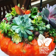 Succ Pumpkins copywrite Container Crazy CT_0001